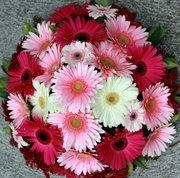 Flowers. Gerbera Delight.