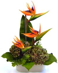 Flowers. Modern Arrangements. Fresh modern flower arrangements using contemporary and unusual flower
