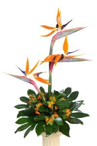 Flowers. Exotic Birds. Simple display of Birds of Paradise and exotic foliage.