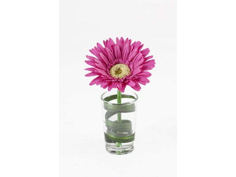Flowers, Single Magenta Gerbera in glass with water illusion. Size: H 15cm W 9cm.