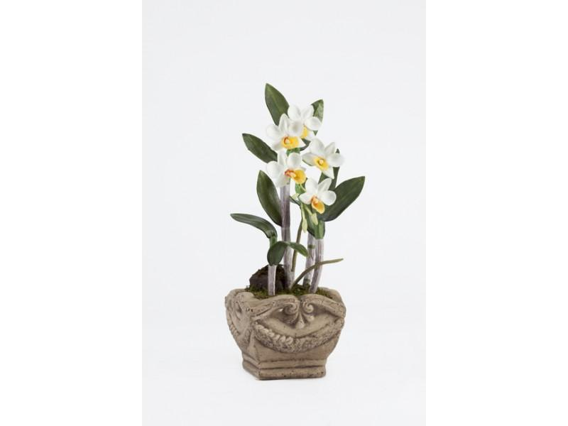 Flowers, Cream and yellow Dendrobium arrangement in Decorative clay pot. Size: H 25cm W 13cm.