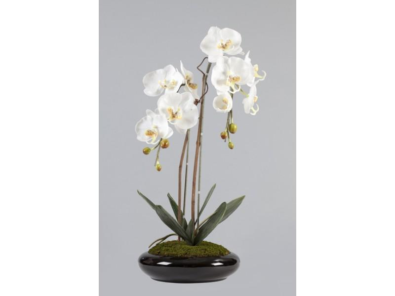 Flowers, White and yellow Phalaenopsis arrangement in Porcelain Black Pot. Size: H 60cm W 40cm.