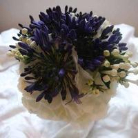 Flowers, Purple and white flowers.